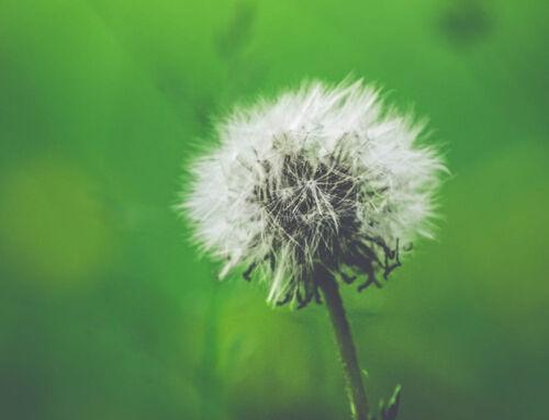 Astuces pour éviter les allergies au printemps