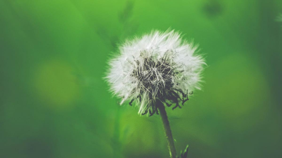 astuces eviter allergies